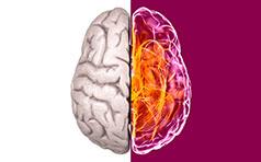 Cerebro Novartis | Cliente: La Nova Harriet